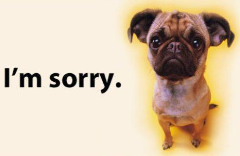 Im Sorry Pug