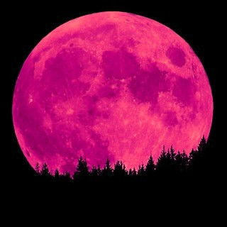 Pink Thing of The Day: Pink Moon | The Worleygig