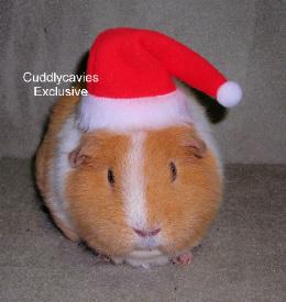 Guinea Pig Santa Hat