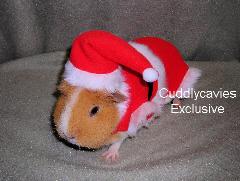 Guinea Pig Santa