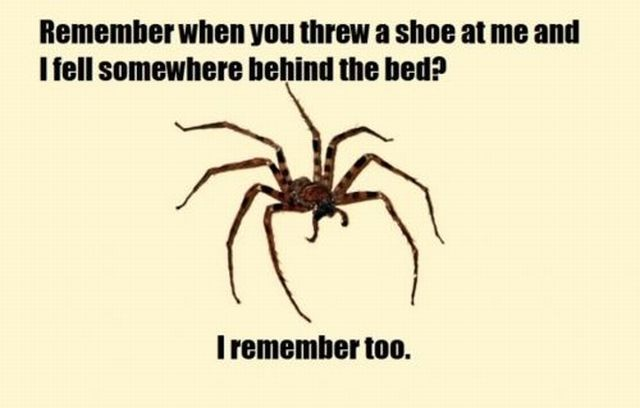 Spider Behind The Bed Revenge