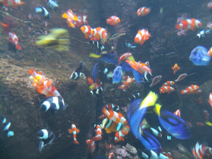 LB Aquarium Clown Fish Nemo