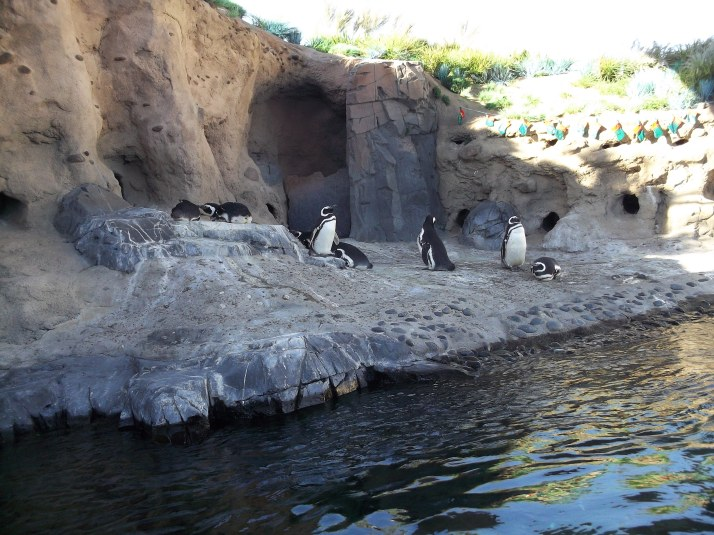 LB Aquarium Penguins
