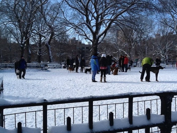 Dog Run In Tompkins Square Park