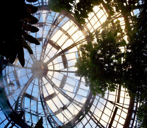 Hunt Lib Terrarium Dome