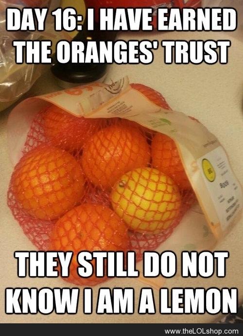 Lemon Hiding in Bag of Oranges