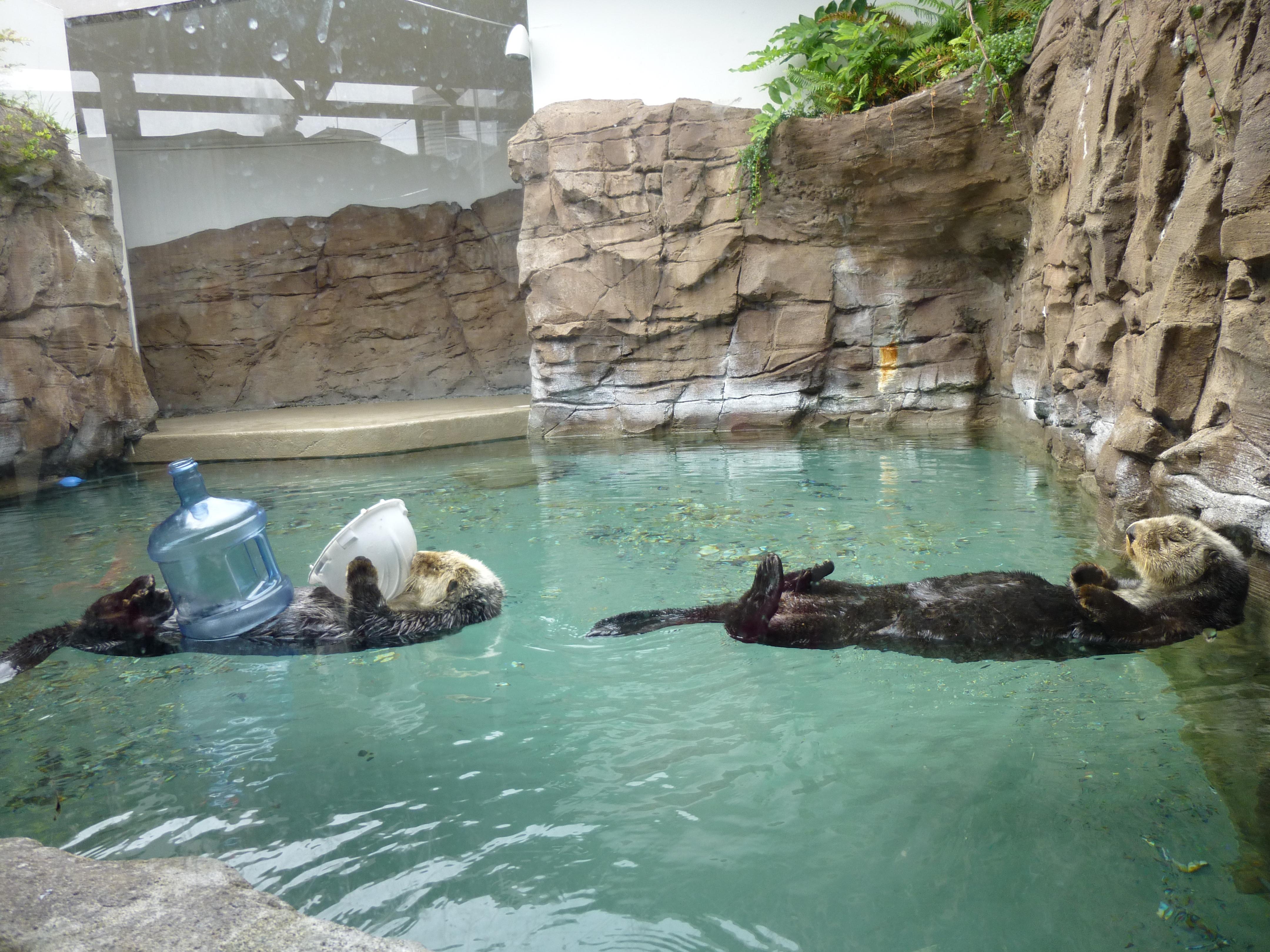 My rad visit to the seattle aquarium the worleygig for Saltwater fish pond