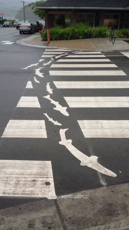 Shark Attack Cross Walk