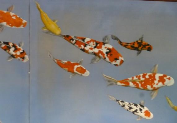 Japanese Garden Koi Fish Mural