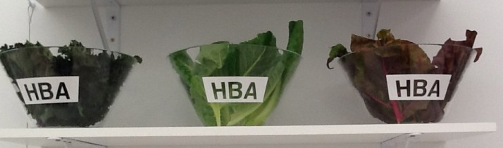 Hood By Air Salad Bowl