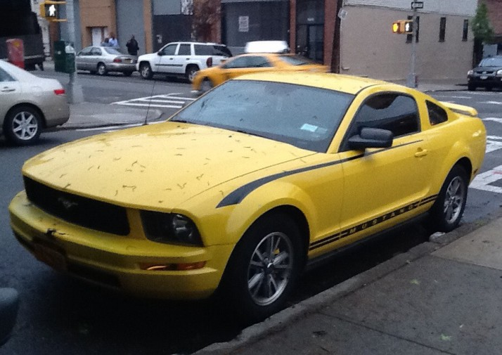 Yellow Mustang Front View