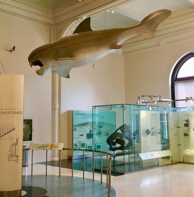 dunkleosteus photo by gail worley