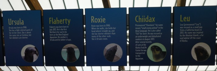 Fur Seal Names