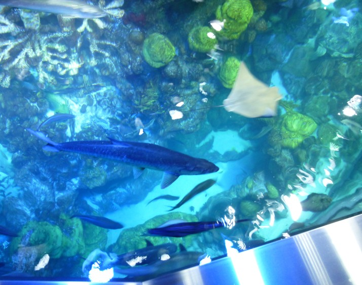Giant Ocean Tank Top View