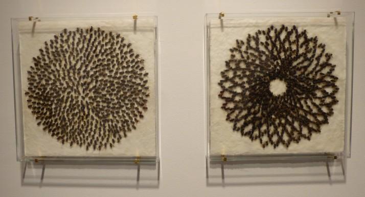 HoneyBee Mandalas By Mary Sweeney
