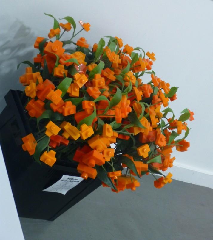 Camera Flowers