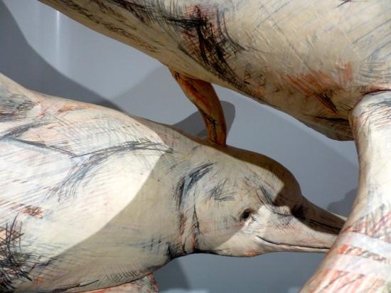 Amazon River Dolphin Blowhole Sex