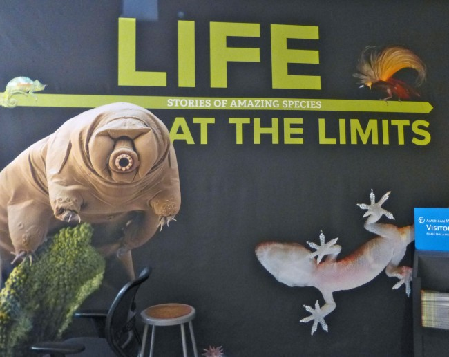 Tardigrade Exhibit Signage