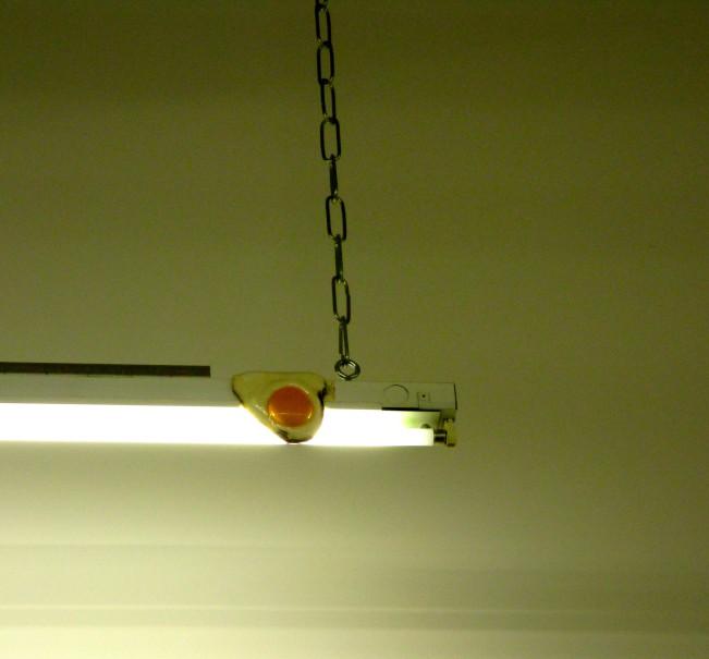 Egg on Lighting Fixture