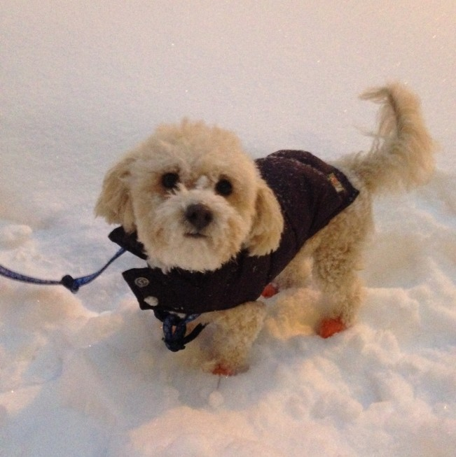 Teddy In the Snow