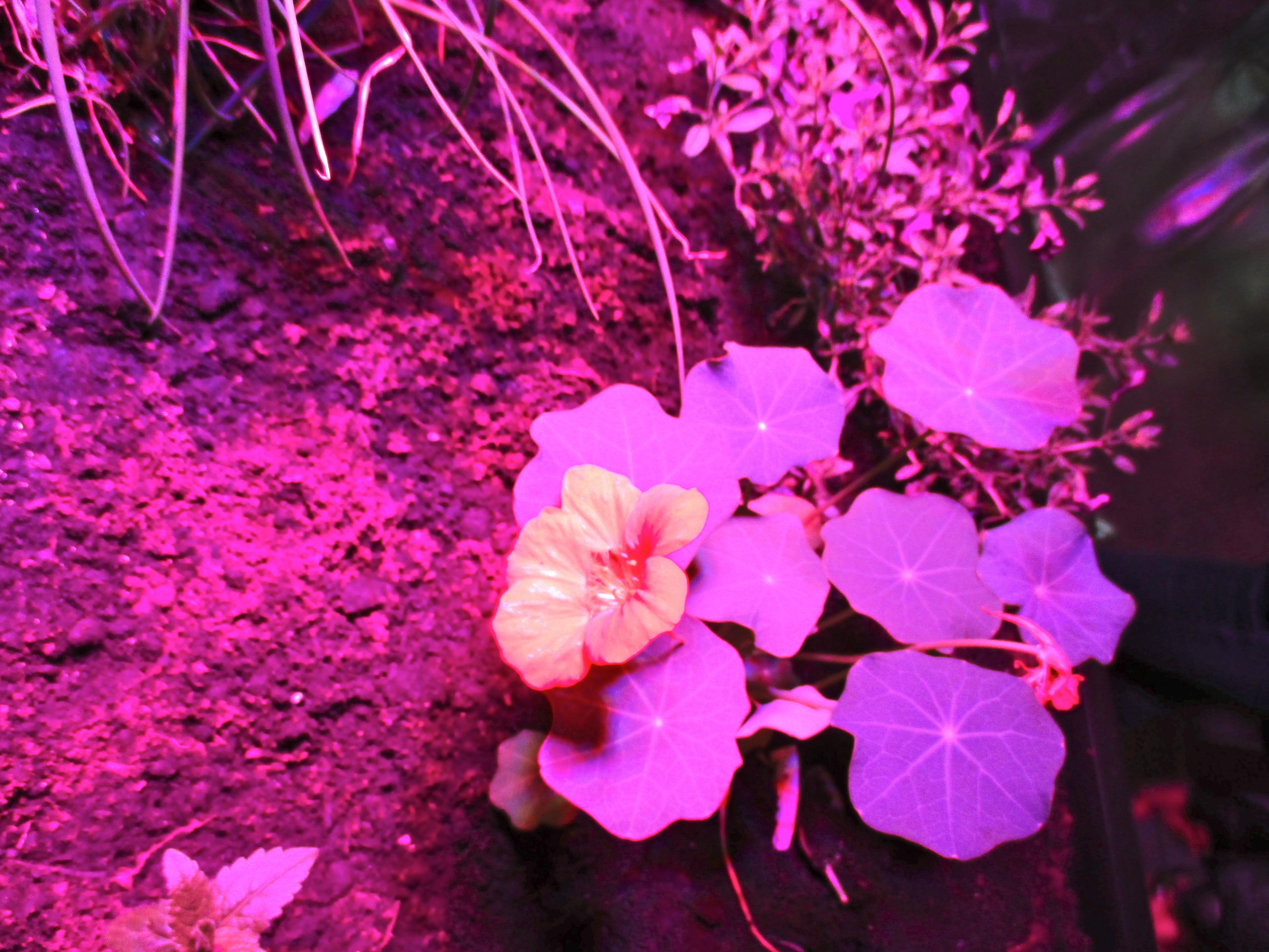 Paula Cooper Gallery Presents Meg Webster's Solar Grow Room