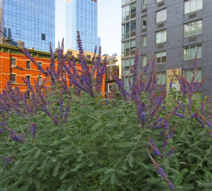 Long Purple Flowers and Buildings