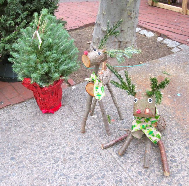 Reindeer and Plant