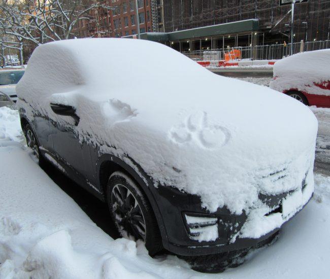 Snow Penis
