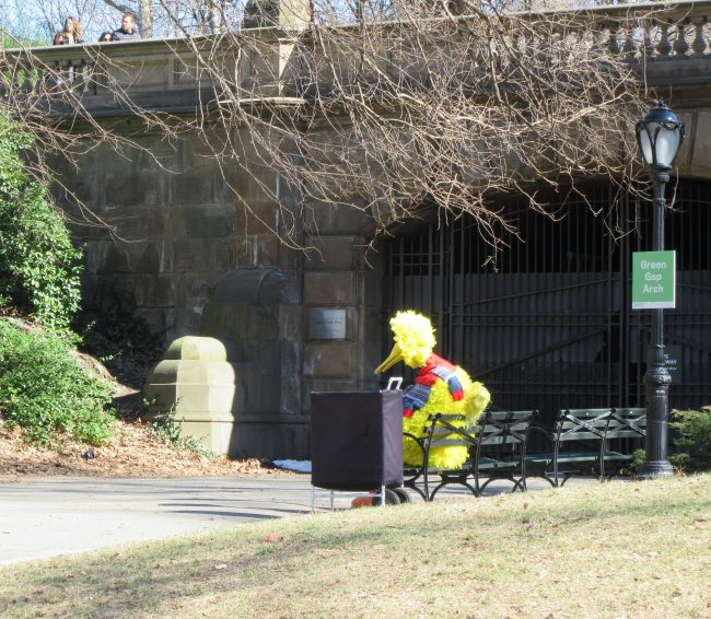 Big Bird in Central Park