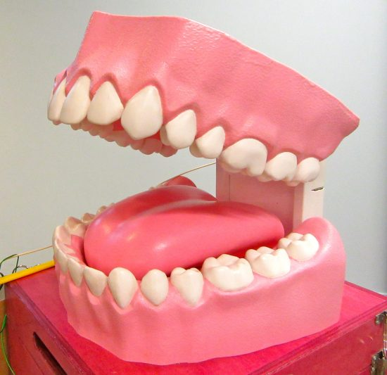 Giant Teeth Model
