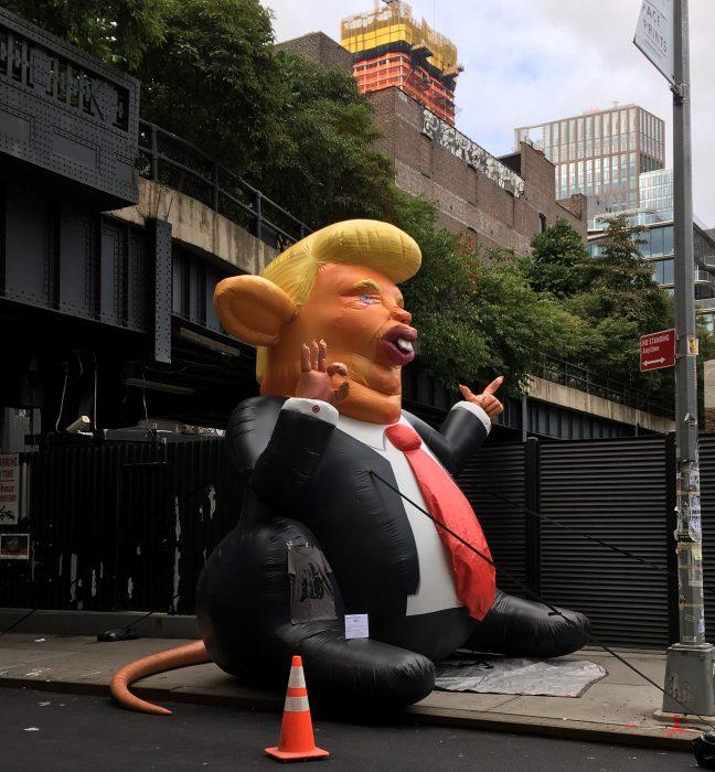 Dump Rat Side View
