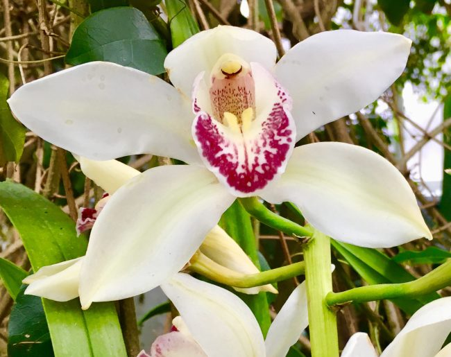 White with Purple Orchid