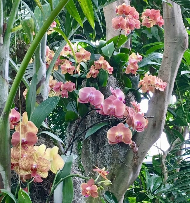 Pink Orchids in a Tree