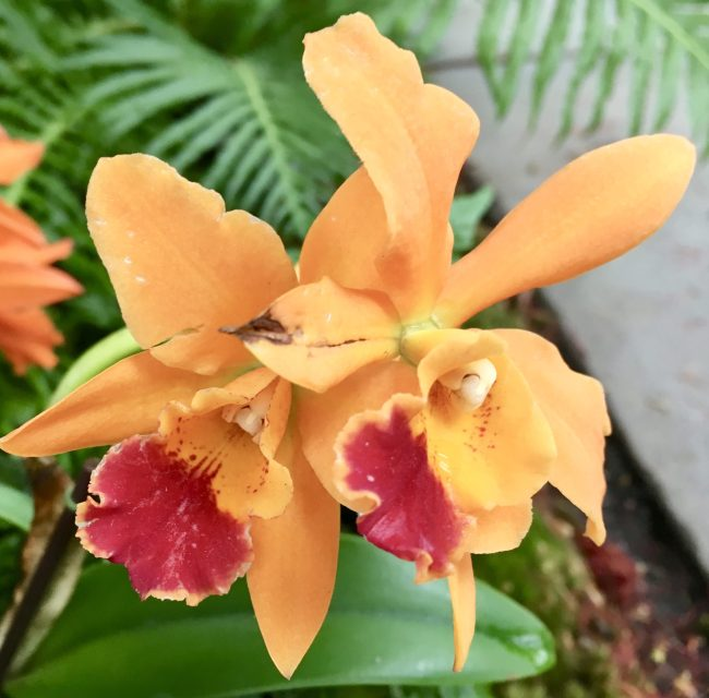 Orange with Red Orchids