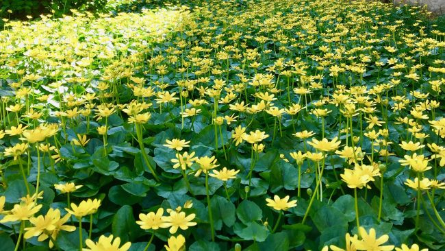 field of yellow flowers photo by gail worley