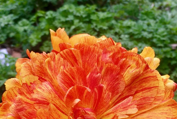 orange flower with green photo by gail