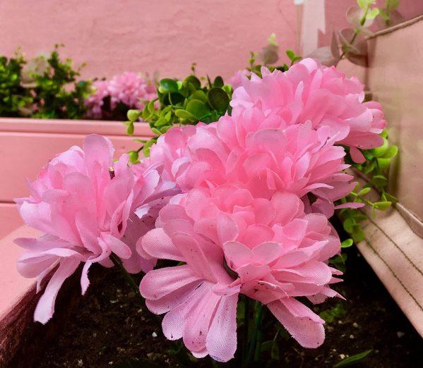 pink silk mums photo by gail worley