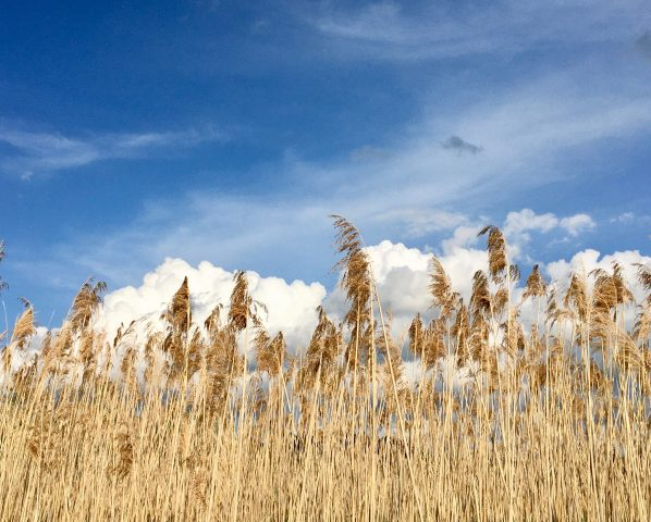 reeds against the sky photo by gail worley