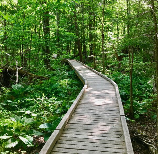 parsons marsh forest boardwalk photo by gail worley