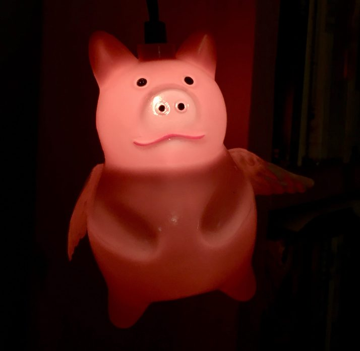 pig light photo by gail worley